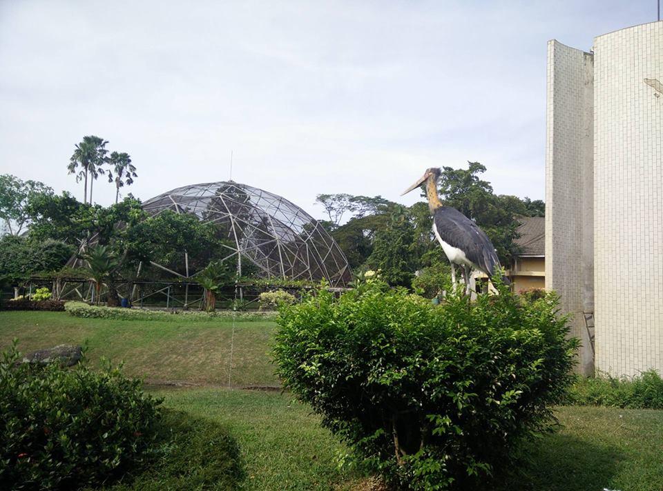 5 bird park