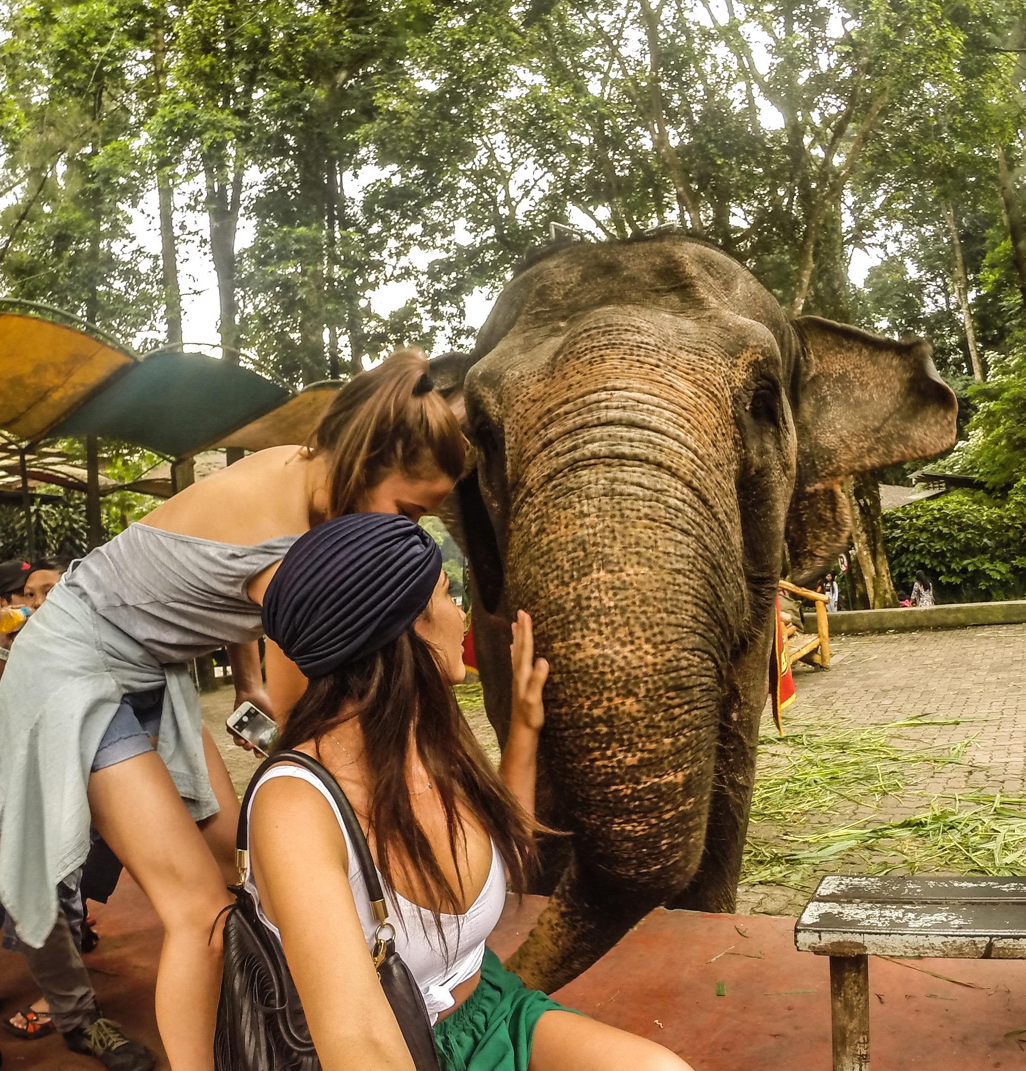 8 safari (1)