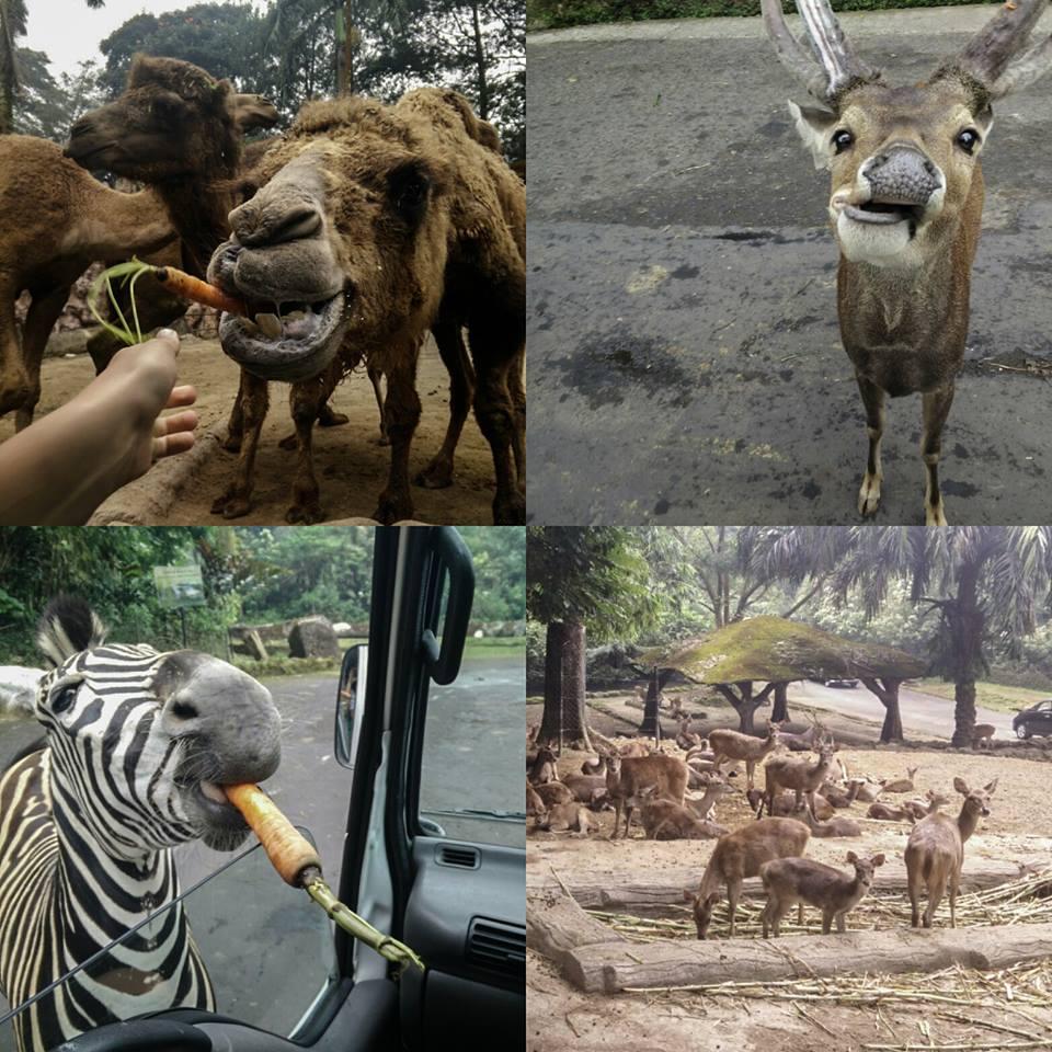 8 safari (3)